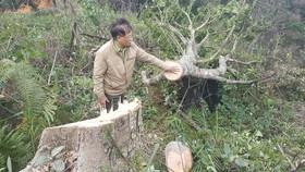 Bắt 11 đối tượng đem cưa máy phá rừng phòng hộ ở Đà Lạt