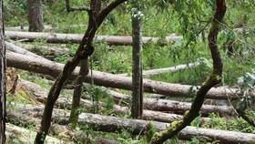 Thủ tướng chỉ đạo kiểm tra, xử lý tình trạng mất rừng tại Lâm Đồng