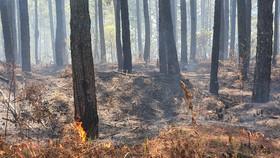 Ngăn chặn, dập tắt ngay các điểm cháy rừng ở Lâm Đồng