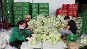 Mỗi ngày Lâm Đồng xuất 4.000 tấn rau, củ đi TPHCM