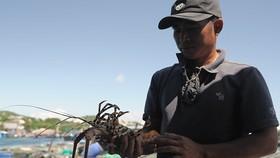 Tảo độc xuất hiện dày đặc trên vịnh Vân Phong