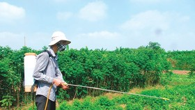 Bộ NN-PTNT loại bỏ thuốc diệt cỏ gây ung thư từ hôm nay (10-4)