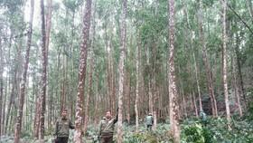 Bộ NN-PTNT đề nghị người dân trồng rừng gỗ lớn
