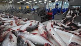 Mỹ công nhận tương đương hệ thống kiểm soát ATTP cá da trơn của Việt Nam