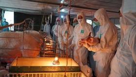 Bộ NN-PTNT báo cáo Thủ tướng về nhập khẩu thịt heo