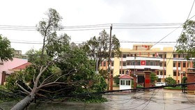 Bão số 9 tràn vào làm đứt nhiều đường dây điện ở các tỉnh Quảng Nam, Quảng Ngãi, Bình Định... trưa 28-10. Ảnh theo EVN