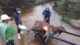 """Hàng trăm gia súc chết cóng, """"huyện báo cáo 2, tỉnh bảo 1"""""""