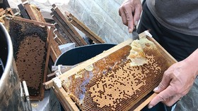 Mật ong Việt Nam bị Hoa Kỳ điều tra chống bán phá giá