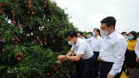 Lo thị trường cho 180.000 tấn vải thiều trong mùa thu hoạch 2021