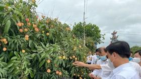 Vải thiều Việt Nam gây được tiếng vang sau 1 năm xâm nhập thị trường Nhật Bản