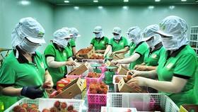 """Thị trường Anh là """"mỏ vàng"""" của nông sản Việt Nam"""