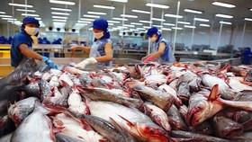 Thế giới đang cần nhập thủy sản Việt Nam, nhưng nhiều nhà máy lại đóng cửa