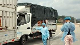 Trung Quốc tạm dừng nhập khẩu thanh long Việt Nam tại cửa khẩu Móng Cái