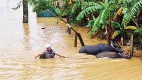 Mưa lũ ở tỉnh Quảng Bình những ngày qua
