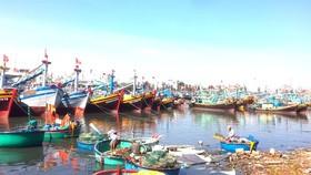 Việt Nam sẽ giảm lượng tàu đánh cá ven bờ