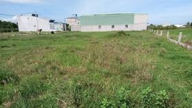 Lô đất tại xã Phong Nẫm (TP Phan Thiết) nằm trong 132 thửa đất có sai phạm.
