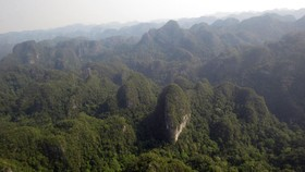 The area where the pure limestone-based coniferous forest grow in Phong Nha-Ke Bang National Park (Photo: SGGP)