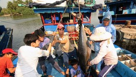 Fishermen in the central province of Binh Dinh catch a tuna fish. Decree 67 was issued to serve the needs of fishermen and contribute to the development of the country's marine economy. (Photo: VNA/VNS)