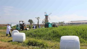 Vinamilk's grass for cattle feed which meets organic standards and contains no chemicals in the southern province of Lam Dong's Don Duong District. (Photo: VNA/VNS)