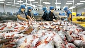 Pangasius fish price reaches ten year high in 2017