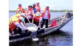 Fish, shrimp and crab are released into Tam Giang lagoon to increase biodiversity (Illustrative photo: VNA)