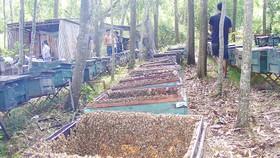 Một trại ong ở làng Mỹ Hòa (xã Giang Sơn Đông, Đô Lương, Nghệ An)