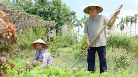 Vợ chồng ông Dương Bá Hiền, hộ gia đình duy nhất quyết tâm trồng rau hữu cơ tại làng rau An Mỹ        Ảnh: NGỌC PHÚC