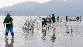 Thừa Thiên - Huế: Trồng cây nơi bờ biển bị xâm thực