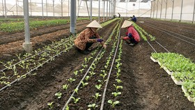 Áp dụng nuôi tôm, trồng rau thủy canh trong nhà màng