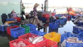 Sơ chế phân loại thủy hải sản ở Cảng Cát Lở, phường 11, TP Vũng Tàu