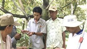 Doanh nghiệp hướng dẫn kỹ thuật trồng trọt, đưa công nghệ vào sản xuất,  hạn chế thiệt hại cho nông dân