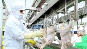 TPHCM: Đảm bảo nguồn cung thịt và trứng gia cầm