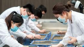"""Các nhà khoa học Trung Quốc gieo trồng giống """"lúa Mặt trăng"""""""