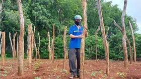 Phát triển bền vững cây tiêu - Bài 1: Quy hoạch 50.000ha, thực tế 130.000ha