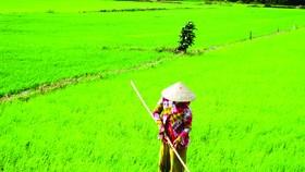 Nhanh chóng ổn định sản xuất nông nghiệp