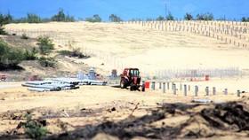 Dự án Nhà máy điện Mặt trời Phù Mỹ 3  san phẳng nhiều hécta rừng phòng hộ ven biển