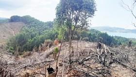 Gần 2ha rừng đầu nguồn thủy điện Hương Điền vừa bị chặt phá