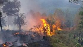 Cháy dữ dội cánh rừng thông trên đỉnh núi Phú Sơn 