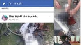 Thời điểm các đối tượng giết voọc rồi phát lên Facebook