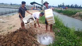 Người dân vớt ốc hương bị chết đi xử lý tiêu hủy