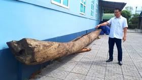 Ông Trần Phi Công, Phó Giám đốc Bảo tàng Hà Tĩnh bên chiếc thuyền độc mộc vừa được di chuyển về bảo tàng để phục vụ công tác nghiên cứu