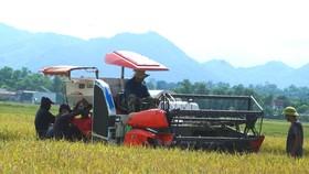 Người dân Hà Tĩnh thu hoạch lúa vụ hè thu thời điểm tháng 9-2021