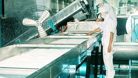 Sản xuất cơm dừa nạo sấy tại Công ty Xuất nhập khẩu Bến Tre Ảnh:  HOÀNG HÀ