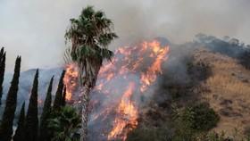 Đây được xem là vụ cháy rừng lớn nhất trong lịch sử TP Los Angeles, bang California (Mỹ) khi lửa đã thiêu rụi 2.000ha rừng. Ảnh REUTERS