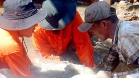 Khai quật tàu cổ đắm tại Bình Châu (Quảng Ngãi)