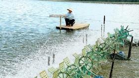 Ứng dụng công nghệ cao trong nuôi tôm tại Bạc Liêu
