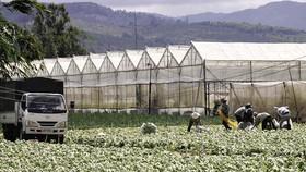 Thu nhập cao từ trồng rau an toàn