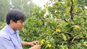Sau tết, nhiều người gửi mai cho các nhà vườn dưỡng để phục vụ tết năm sau