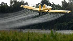 Pháp tạm cấm sử dụng một loại thuốc trừ sâu phổ biến