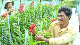 Nông dân phấn khởi khi trồng lan cho lợi nhuận gấp 40-50 lần                                                      trồng lúa                Ảnh: CAO THĂNG